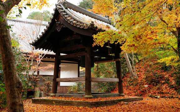 京都圆光寺图片