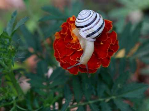 鲜花上的小蜗牛图片