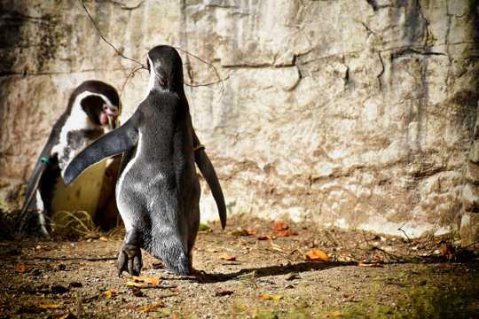 憨态可掬的企鹅