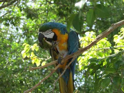 树上的金刚鹦鹉