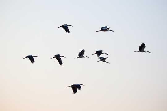 翱游的海鸥的图片