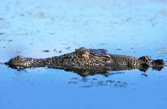 惊悚冷鳄鱼图片