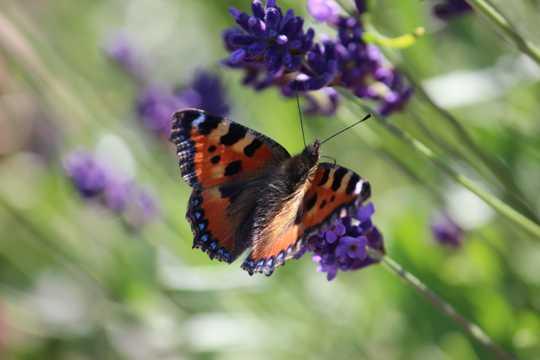 花枝上的蝴蝶