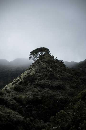 绿色的山脉景物图片