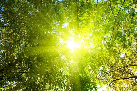 美丽的森林光景图片