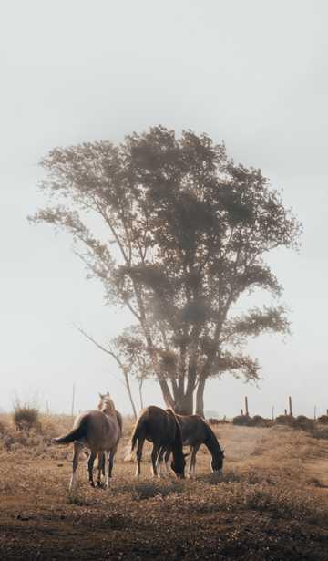 马正在吃草的图片