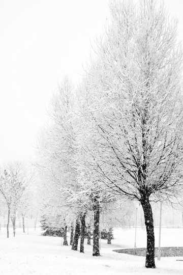 冬日树林雾凇雪景