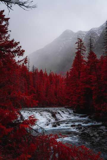 水杉树流水自然风光