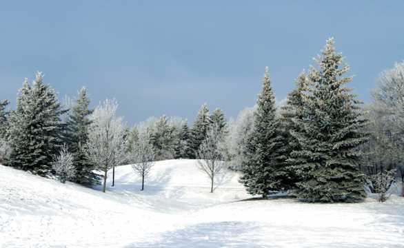 唯美雪山丛林景致
