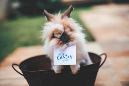 毛茸茸的兔子图片