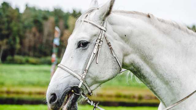 一匹聪慧敏捷的骏马