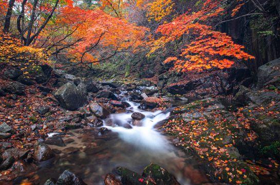 秋日树林小溪景致
