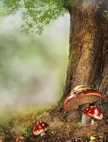 梦幻森林野生蘑菇