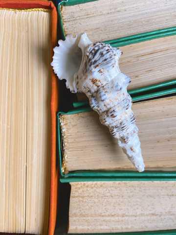 书籍上的长贝壳