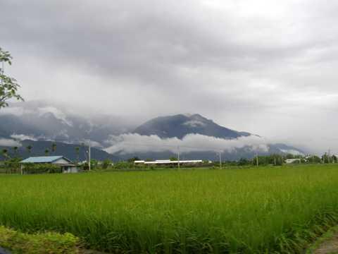 农村稻田景象图片