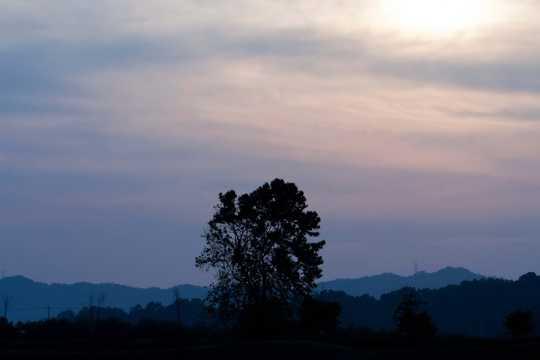 暮色下的树木剪影
