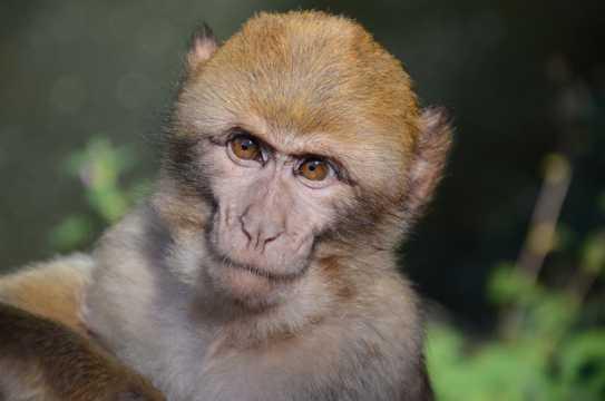 乖巧的小猕猴图片