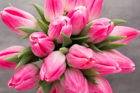 粉红色的郁金香,高清,5K