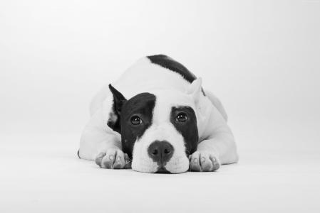 狗,可爱的动物,4k(水平)