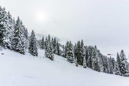 森林,树,雪,冬天,5k(水平)