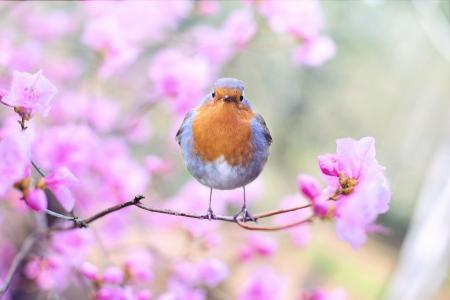 鸟,春天,5K(水平)