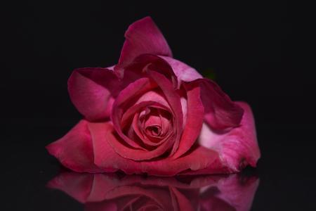红玫瑰,花瓣,黑暗的背景,高清,4K,5K