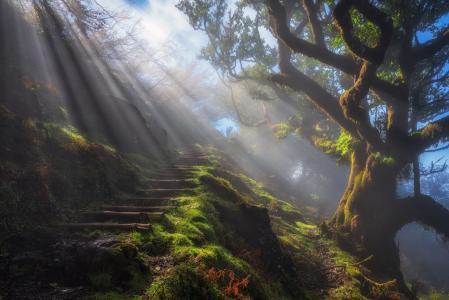 太阳光线,草,树,自然的楼梯,高清