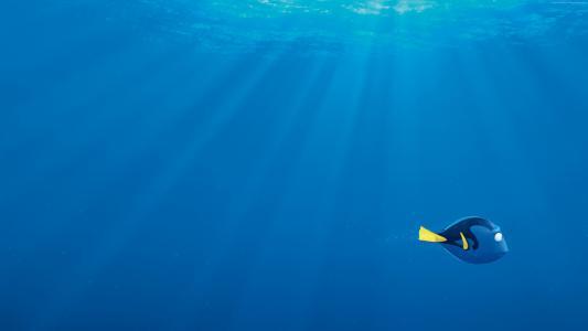 寻找海,,海底总动员,鲨鱼,鱼,皮克斯,动画(水平)