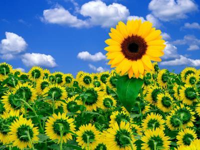 一点点阳光照亮你的一天