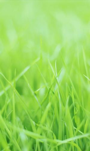养眼小清新绿草摄影