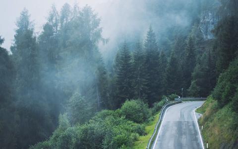 公路旁的森林大雾