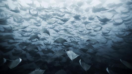 涌上海面的深海游鱼