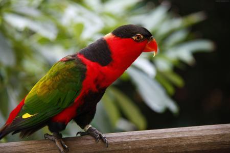 鹦鹉,裕廊飞禽公园,旅游,鸟,动物,自然,红色,绿色(水平)