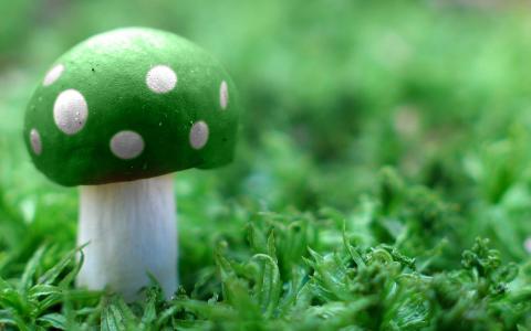 绿色蘑菇宽