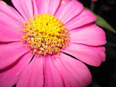 美丽的花,宏,4 k