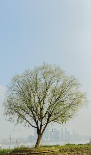 自然优美的大树