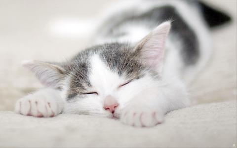 小猫,猫,可爱,4k(水平)