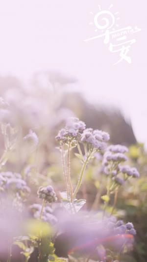 早安晨曦下的花朵