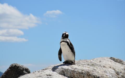 企鹅,天空,4k(水平)