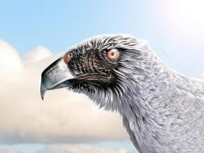 奇怪的老鹰