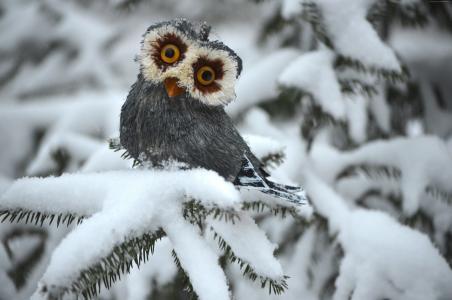 猫头鹰,松树,雪,可爱的动物,搞笑(水平)