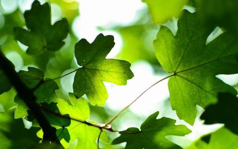 绿色叶子4K