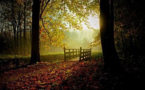 阳光明媚的秋日