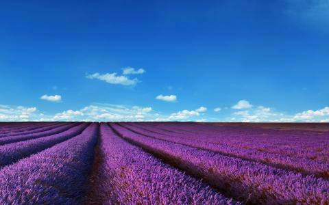 淡紫色领域