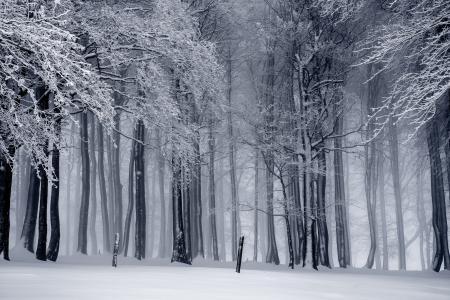 森林,树木,雪,冬天,4k(水平)