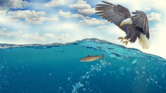 鱼,老鹰,水下,4k(水平)