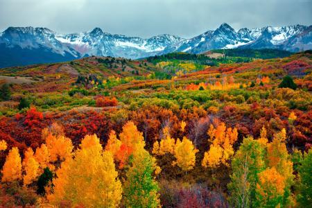 秋天,森林,山,5k(水平)