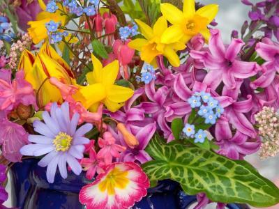 春天的花朵从花园里