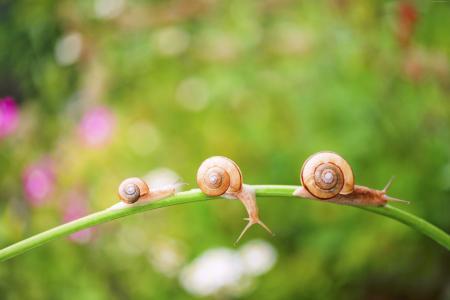 蜗牛,自然,阳光(水平)