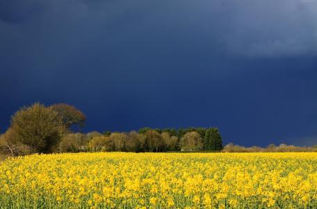 草地,5k,4k壁纸,野花,天空,云(水平)